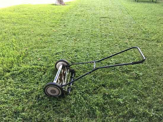 Best Push Mower for The Money