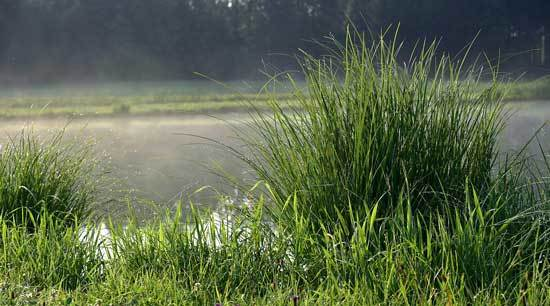 How To Stop Grass From Growing 2