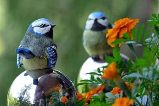 Birds Eats Marigold