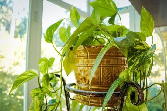 Amazing Indoor Hanging Plants