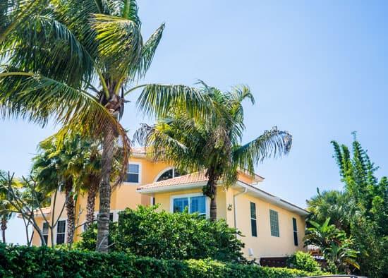 How to Kill A Palm Tree