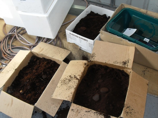 Ground coffee in boxes