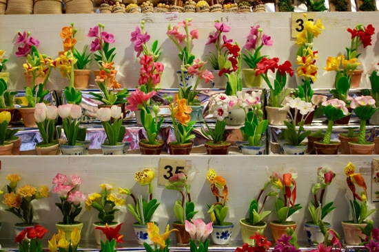 How Long Do Orchids Live variety of orchids in flower pots