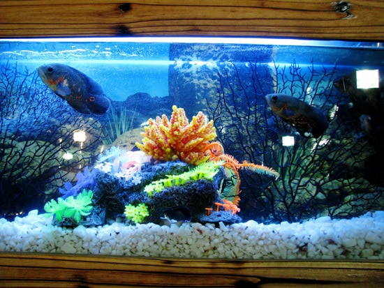 Which Is the Best Water For Plants Water from fish tank