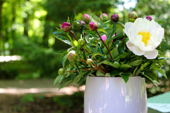Best Fragrant Flowers for Pots Peony
