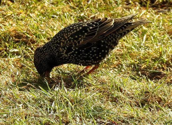 Do Birds Eat Grass Seed