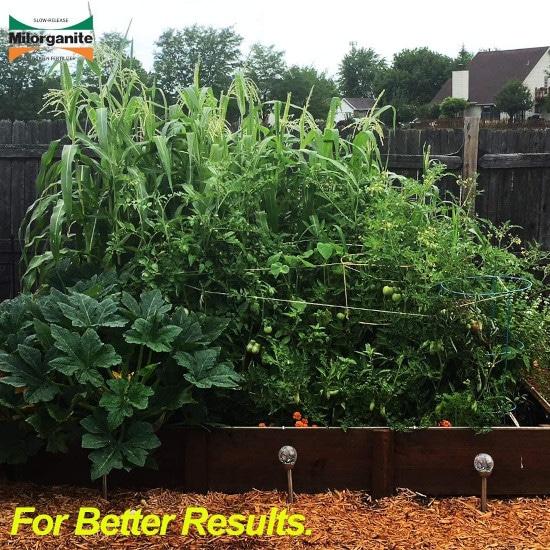 Milorganite Organic Nitrogen 0636 Fertilizer When To Use Milorganite 2