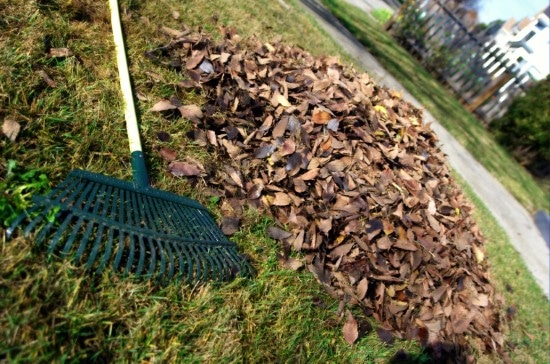 A Complete Guide On How To Use A Landscape Rake 2