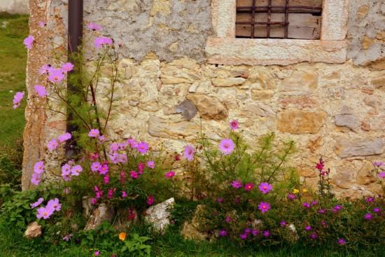 Check the light level How To Start A Flower Garden