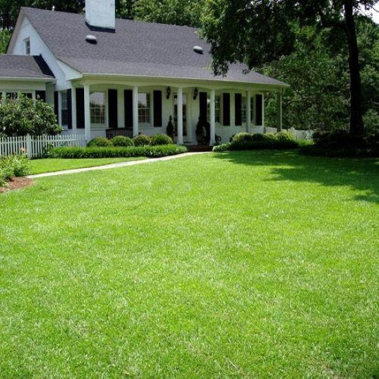 Patten Seed Company TifBlair Centipede 1 Lb Grass Seed Best Grass Seed for Florida 2