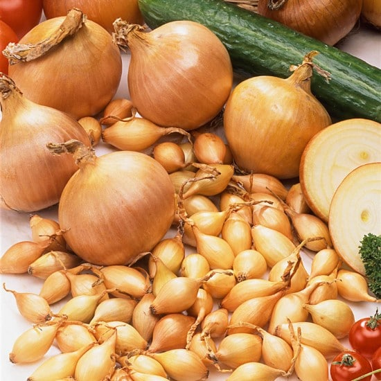 Onion STURON How To Grow Onions From An Onion